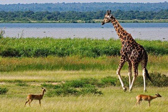 5 Days Murchison Falls And Kibale National Park Safari