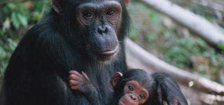 6 Days Chimpanzee Wildlife & Bwindi Tour