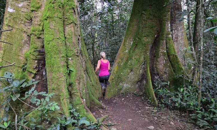 Nature Walks & Hiking