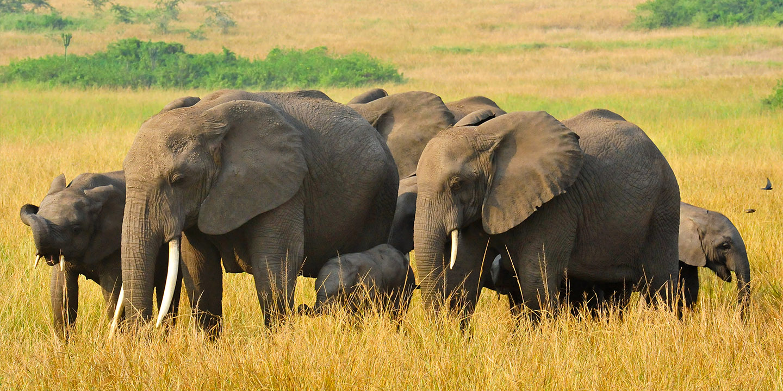 8 Days Uganda wildlife safari
