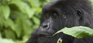Activities in Bwindi Impenetrable National Park
