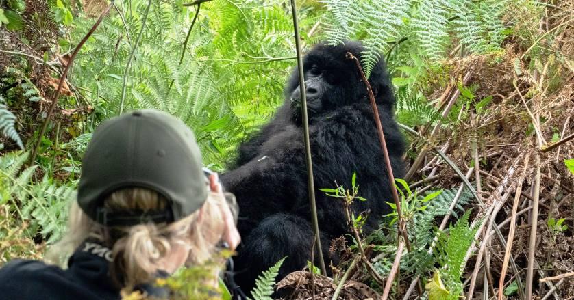 7 Days Uganda safari-chimpanzee trekking, gorilla trekking and wildlife