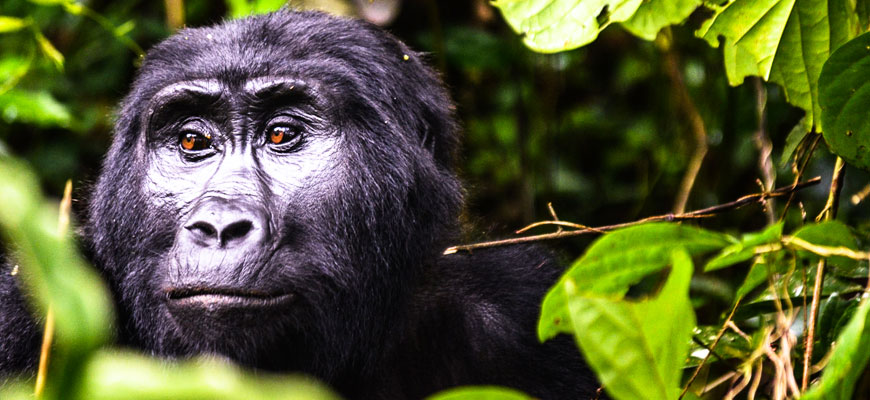 Things to do in Bwindi impenetrable national park