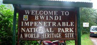 Entrance Fees to Bwindi Impenetrable National Park