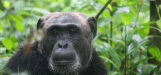 11 Days Uganda Rwanda Primate Tracking and Wildlife safari