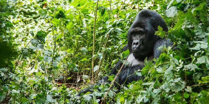 7 Days Primates and Birding Safari