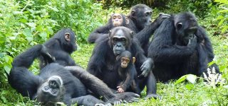 5 Days Uganda Chimpanzee Safari