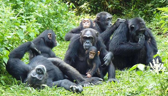 11 Days Uganda gorilla trekking safari