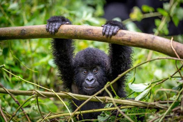 10 Days Uganda Safari Adventure