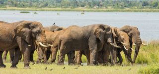 15 Days Uganda Safari Adventure