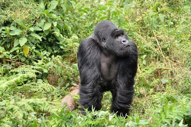 15 Days Uganda Safari Adventure