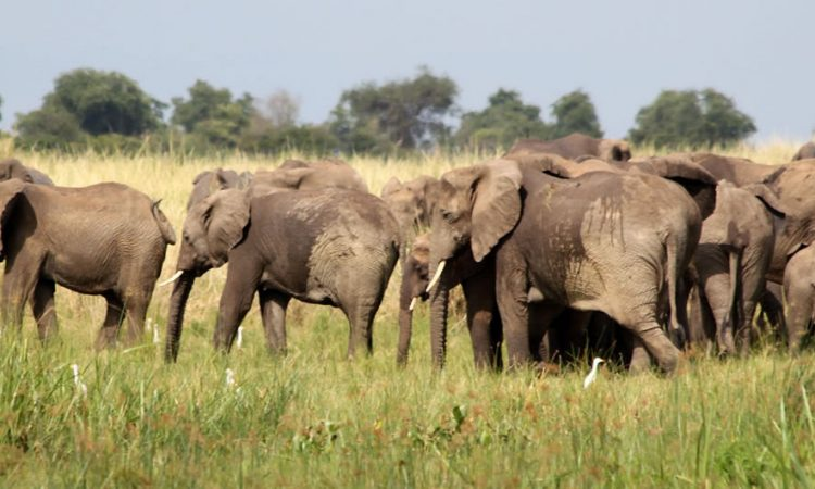 18 Days Uganda Wildlife and Primates Safari Adventure