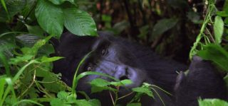 20 Days Uganda Wildlife and Primates Safari