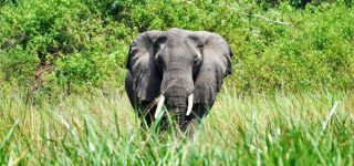 12 Days Uganda Safari Adventure