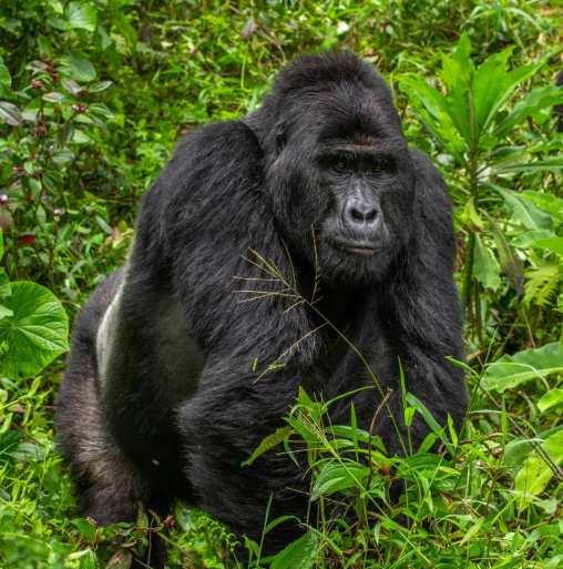 12 Days Uganda Safari Adventure