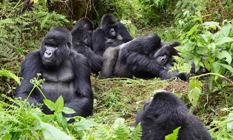10 Days Uganda Gorilla trekking Wildlife and Chimpanzee trekking