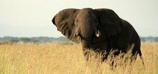 10 Days Uganda Safari Experience