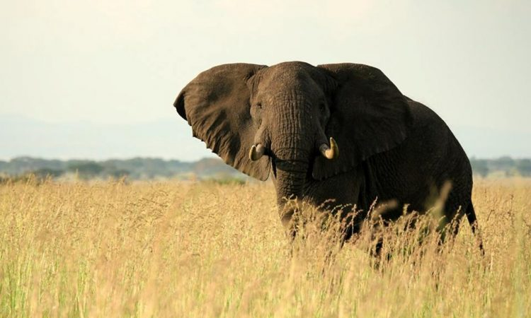 10 Days Uganda Safari Experience