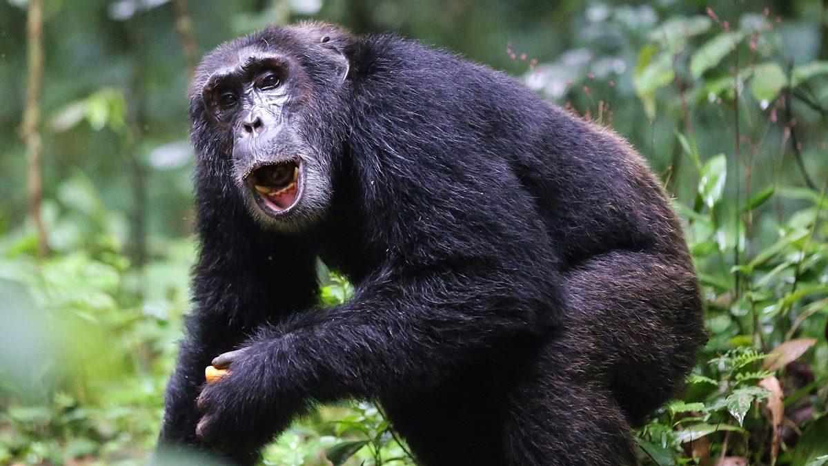 7 Days Best of Uganda safarits 2021