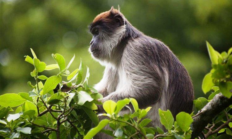Wildlife in Kibale National Park