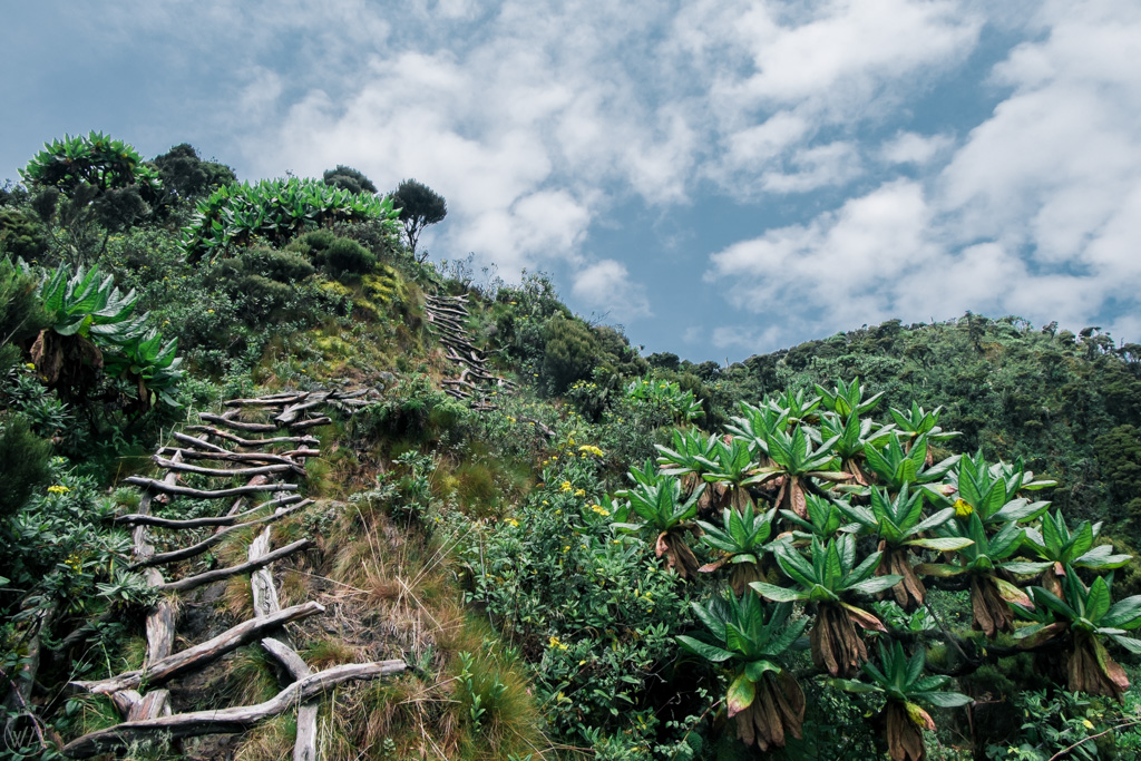 Things to do in Mgahinga gorilla national park